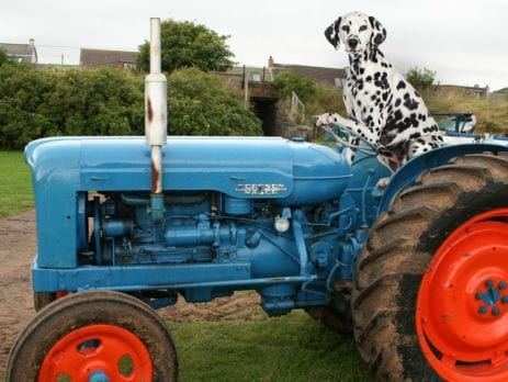 Fordson Major Tractor, Tractor spits oil from the exhaust